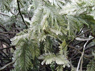 nature-glace-neige (6)
