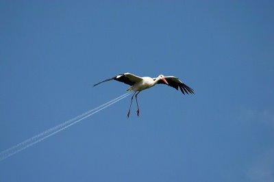 صورة طائر