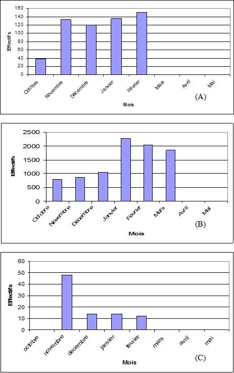 effectifs de Canard chipeau (A), la Sarcelle d'hiver (B) et la  Sarcelle marbrée (C