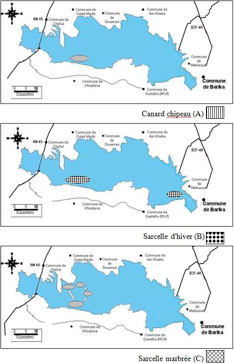 Occupation spatiale du Chott El Hodna par le Canard chipeau (A), la Sarcelle d'hiver (B) et la Sarcelle marbrée
